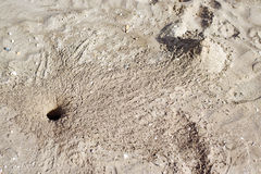 Crab hole in the sand Royalty Free Stock Image