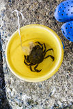 Crab caught on a crabbing line in a yellow bucket. Large crab in a yellow bucket caught by a child wearing blue shoes stock images