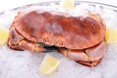 Crab in ice. With lemon royalty free stock images