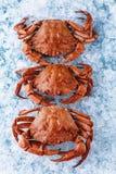 Crab on ice Stock Photo