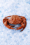 Crab on ice. Fresh crab on ice at the farmer`s market Royalty Free Stock Images