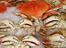 Crab on ice Stock Photography