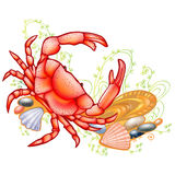 Crab icon sea ocean animal Royalty Free Stock Image