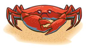 Crab. An Illustration of a crab walking along the beach Stock Photography