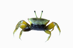 Crab isolated Stock Images