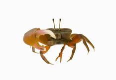 Crab isolated Stock Photo