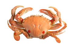 Crab Isolated On White Stock Images