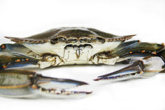Crab. In isolated white background Royalty Free Stock Photos