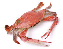 Crab Stock Photography