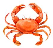 Crab isolated on white background, watercolor. Illustration stock illustration