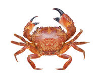 Crab isolated on white Royalty Free Stock Image