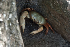 Crab on land Royalty Free Stock Photos