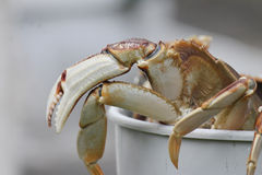 Crab leg Stock Photo