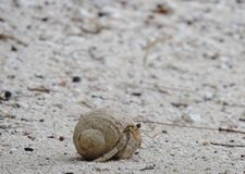 Crab. Little crab in a shell moving across the sand royalty free stock photos