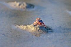 Crab Royalty Free Stock Photos