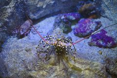 A crab is looking for something to eat. On a stone royalty free stock photo