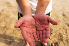 Crab on a man hand Stock Photography