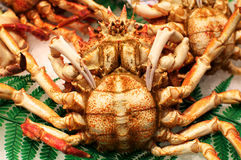 Crab on the Market in Barcelona Stock Photos