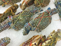 Crab in market. Crab in market seafood fresh for cook Stock Images