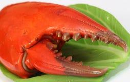 Crab Meat Stock Photos