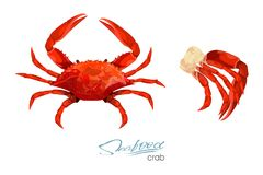 Crab and meat crab vector illustration in cartoon style isolated on white background. Seafood product design. Inhabitant. Crab and meat crab vector illustration Royalty Free Stock Image