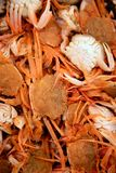 Crab from Mediterranean, texture pattern Stock Photography