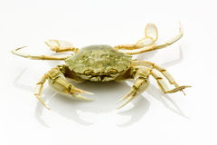 Crab, the most delicious seefood ever Stock Photography