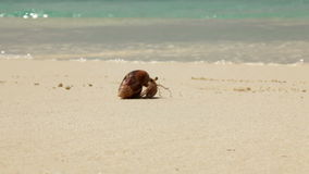 Crab moving across the beach stock video footage