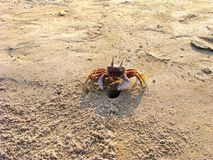 Crab near his home on the beach royalty free stock photos
