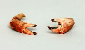 Crab nippers Stock Image