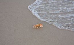 Crab ocean beach. Water coast Royalty Free Stock Images