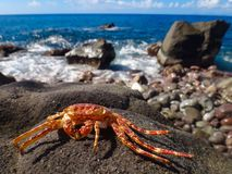 Crab on a rock by ocean Royalty Free Stock Image