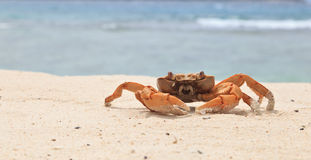 Free Crab On Tropical Beach Royalty Free Stock Photo - 25425805