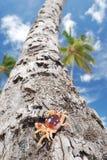Crab on palm Stock Photo