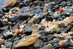 Crab parts on beach Stock Photography
