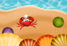 Crab with pearl on the beach Royalty Free Stock Photo
