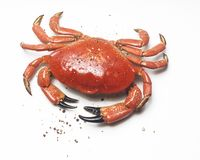 Crab and pepper Royalty Free Stock Photo