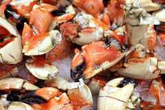 Crab pincers Stock Photography