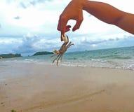 Crab pinch finger. Crab pinch man finger on the beach Stock Photos