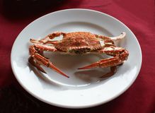 Crab on the plate. Stock Photos