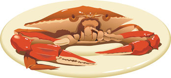 Crab on the plate. Delicious food, close up view, vector illustration Royalty Free Stock Image