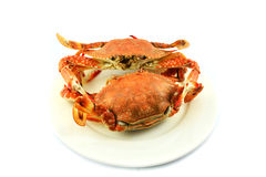 Crab on  plate Stock Photo