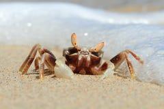 Free Crab Portrait On Tropical Beach, Sulawesi Stock Photo - 44734550