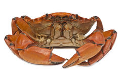 Crab prepared Royalty Free Stock Image
