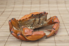 Crab prepared Stock Photos