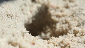 Crab problems. The little crab runs out of its hole and runs back stock video footage