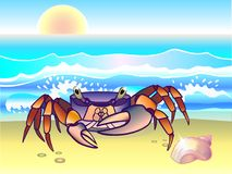 Crab. Rainbow crab on the seashore. Ocean. Seascape with crab and seashell. stock illustration