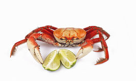 Crab is ready Stock Image