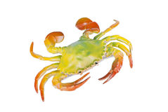 Crab Royalty Free Stock Photography