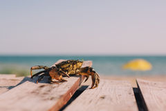 Crab relaxing on beach Royalty Free Stock Photography